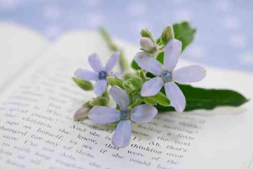 本と青い花
